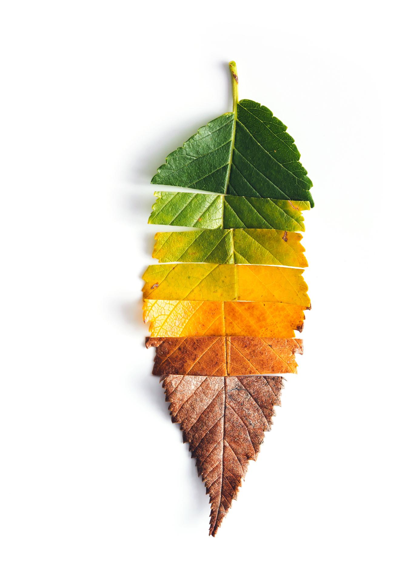 Decor Leaf